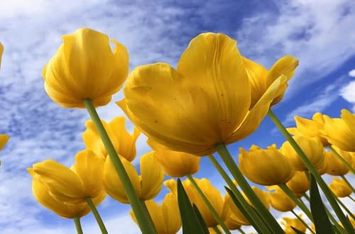 Spring Lillies Scavenger Hunt
