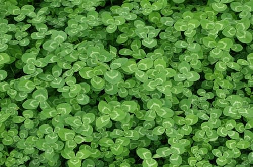 Saint Patrick's Day Clovers